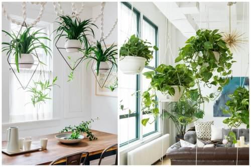 Кашпо с ампельными растениями в интерьере