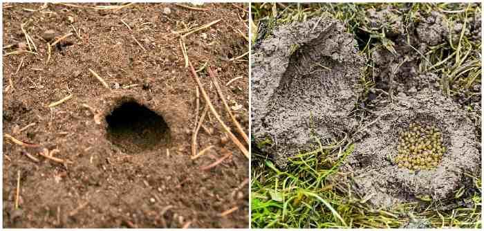 Нора и гнездо медведки