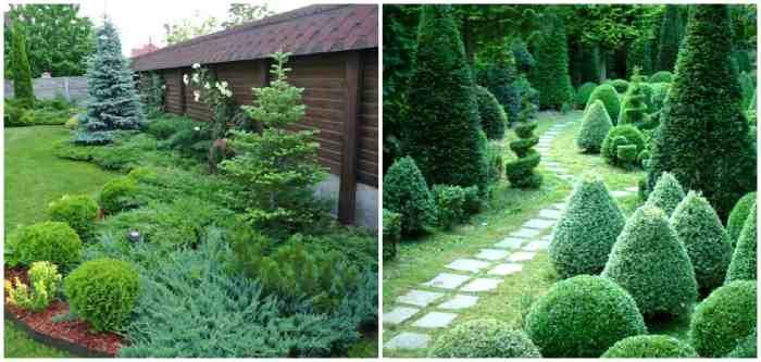 Picea abies Nidiformis в ландшафтном дизайне
