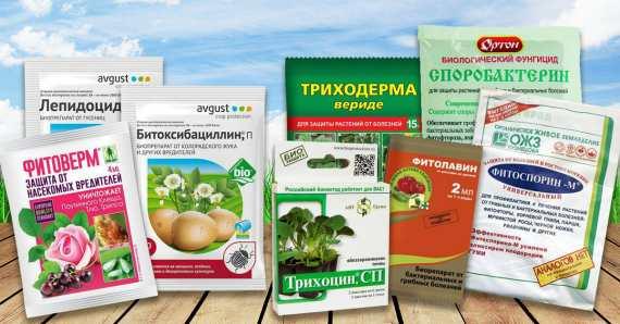Фунгициды для комнатных растений