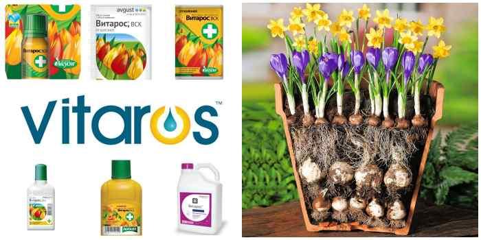 Продукция компании Витарос для луковичных