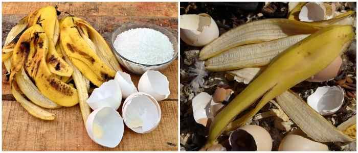 Удобрения из банановой кожуры с яичной скорлупой
