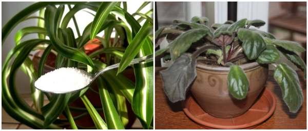 Польза и вред сахара для растений